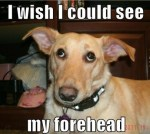funny-dog-pictures-i-wish-i-could-see-my-forehead